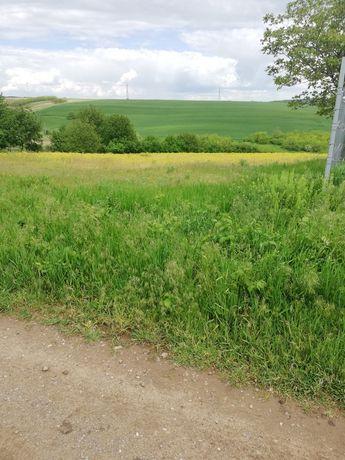 Teren 4230  sat Dorobanti- Iași