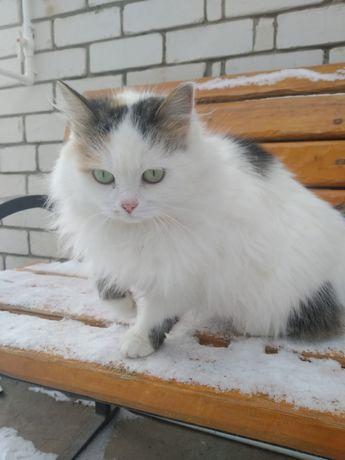 Красивая Кошка ищет дом