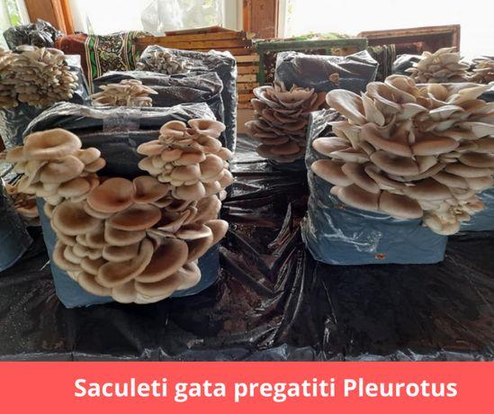 Compost gata pregatit insamantat cu Miceliu Pleurotus