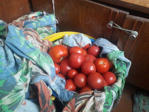 Продам помидоры на засолку