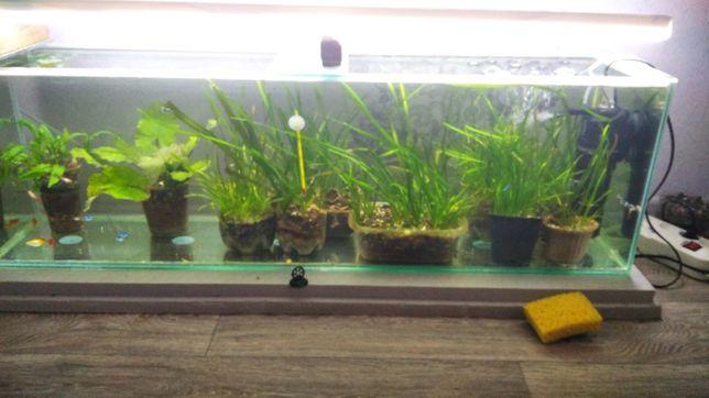 Аквариум с рыбками компрессором растениями