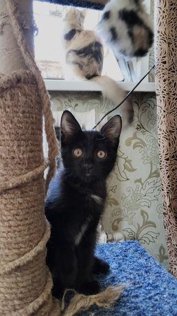 Черненький котенок ждет своего хозяина