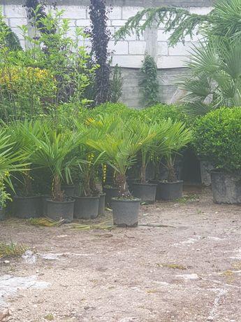 Plante ornamentale pentru terasă