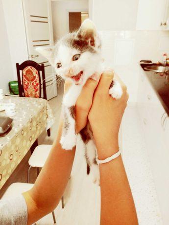 Котенок с красивым окрасом