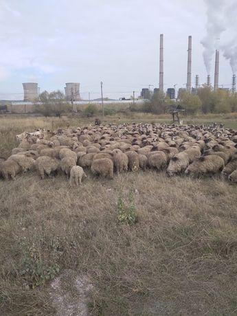 Vand turma  oi aflata la Turceni