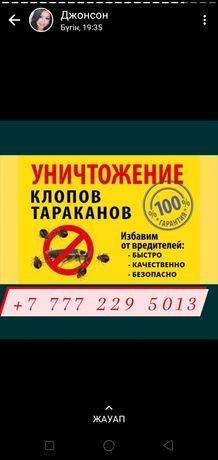 Дезинфекция Алматы от домашних насекомых таракан клопы плесень
