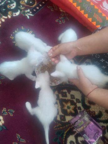 Котят в добрые руки