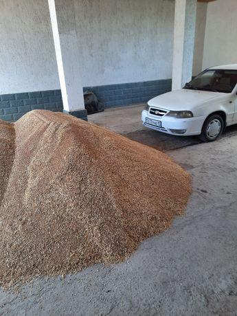 Бидай оптом пшеница Шубаровка