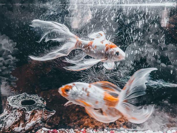 Продам акварюм и рыба