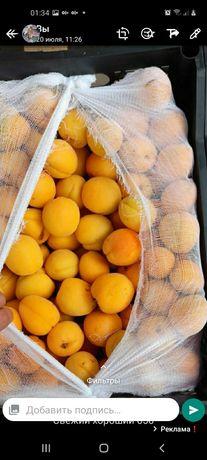 Свежие абрикосы оптом и розница