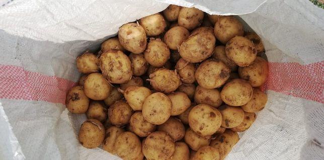Продам  картошку едовую