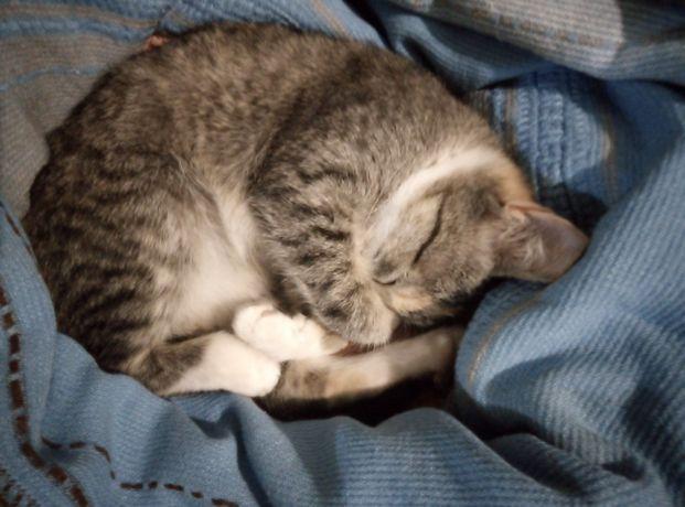 Мысык кыз 4 ай котенок девочка