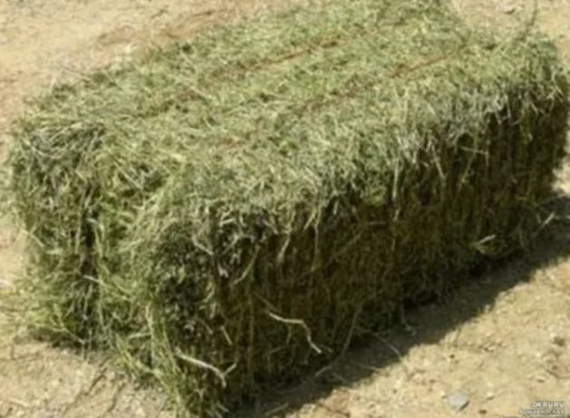 Продаю сено в тюках оптом