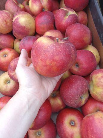 Продаю яблоки польские
