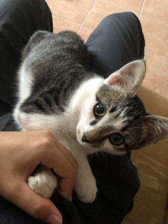 Отдам котенка бесплатно в хорошие руки !