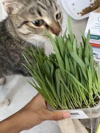 Ласкова кошка в добрые руки