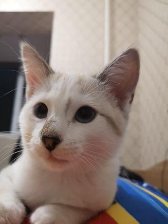 потерялась кошка в селе мичурино,середине июня