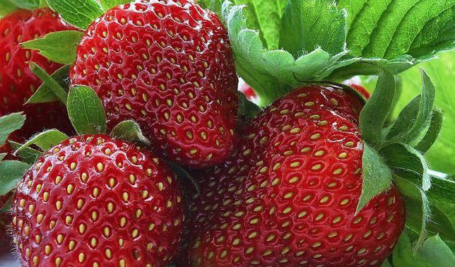 Регулярный урожай Набор для выращивания клубники