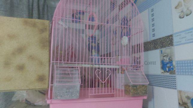 продам попугая со всеми условьями