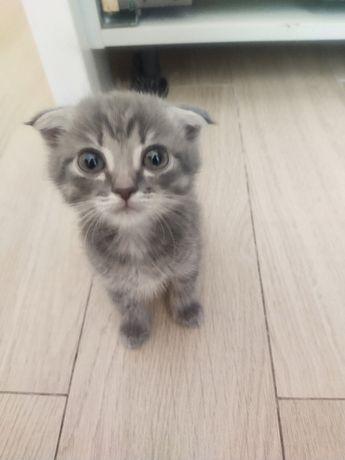 Продам котят вислоухие без родословной