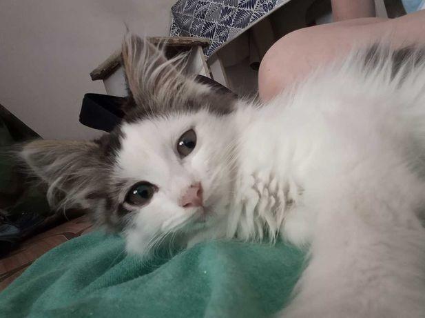 Отдам чудо-котенка в добрые руки