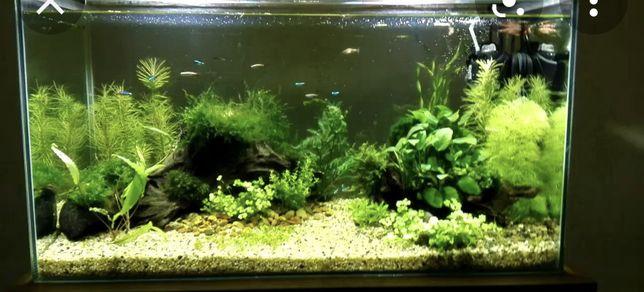 Продам аквариум на 120 литров