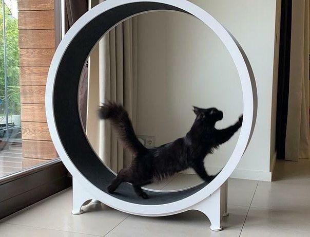 Изготовление беговые кольца для кошек домики и когтеточка Cat House