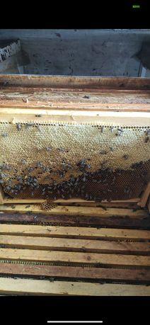 """Мёд натуральный оптом и в розницу. """"Витькин мёд"""""""