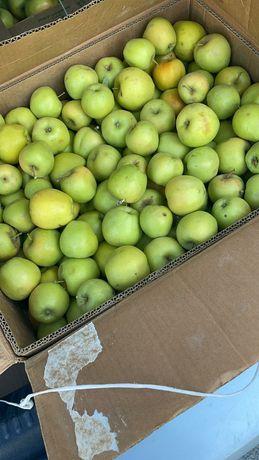 Яблоки садовые кг 350