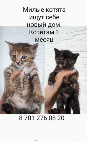 Котята один месяц