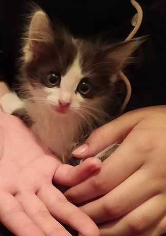 Отдадим котят в добрые ручки