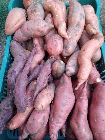 De vanzare cartofi dulci