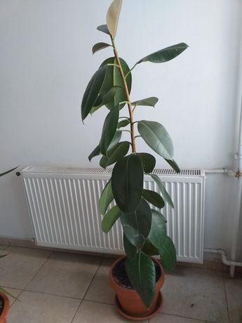 Planta apartament 1.70 cm