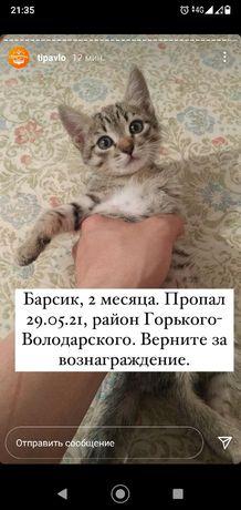 Пропал кот Барсик