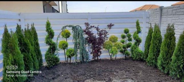 Plante ornamentele gazon rulou de cea .mai buna calitate