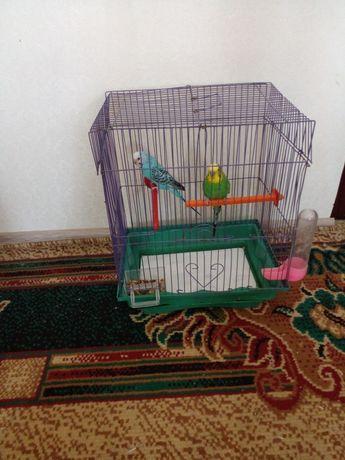 Попугай клеткой корм