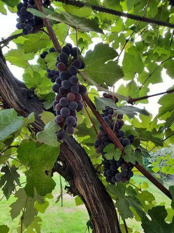 Виноград продается