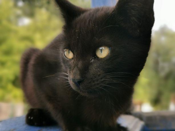 Отдам чёрного котенка