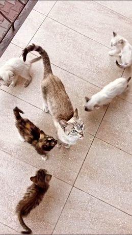 Отдаём котят в добрые руки!