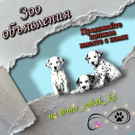 Собаки группа в инстаграмме