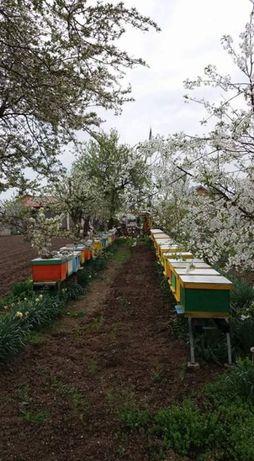 Roi de albine-disponibil din 20 mai