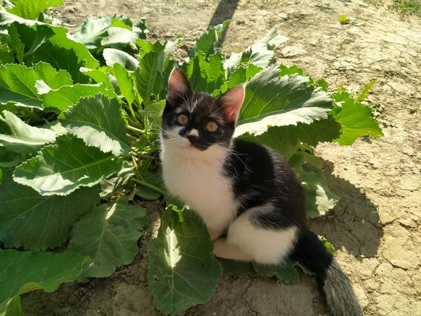 Домашние кошки. Үй мысықтары