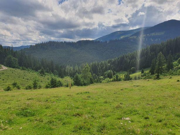 Vand 1 Ha Teren pe Muntele Vladeasa