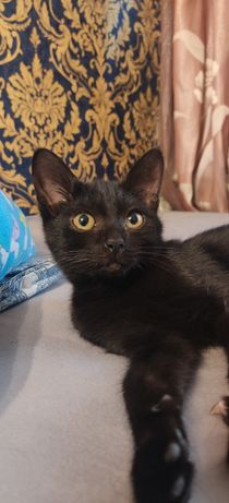 Отдам чёрного котёнка