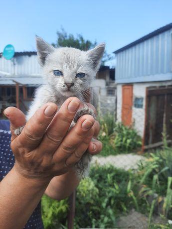 Отдадим котят в добрые, заботливые руки