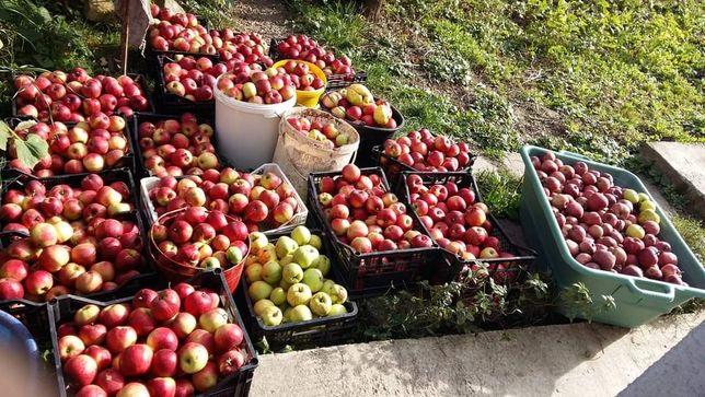 Vând mere pentru suc