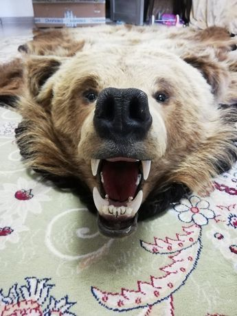 Медвежьи шкура чистый