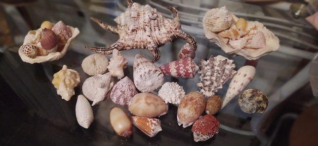 Мальдивские ракушки