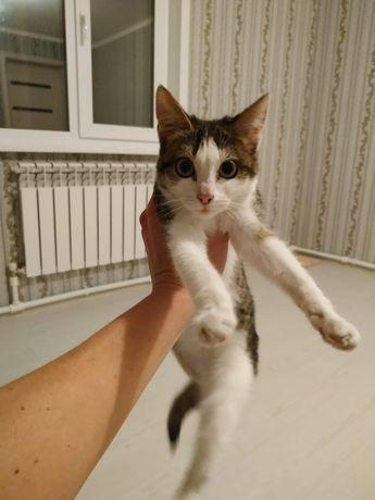 Красивая котенок-кошечка в добрые руки ! Бесплатно Доставка Стерил