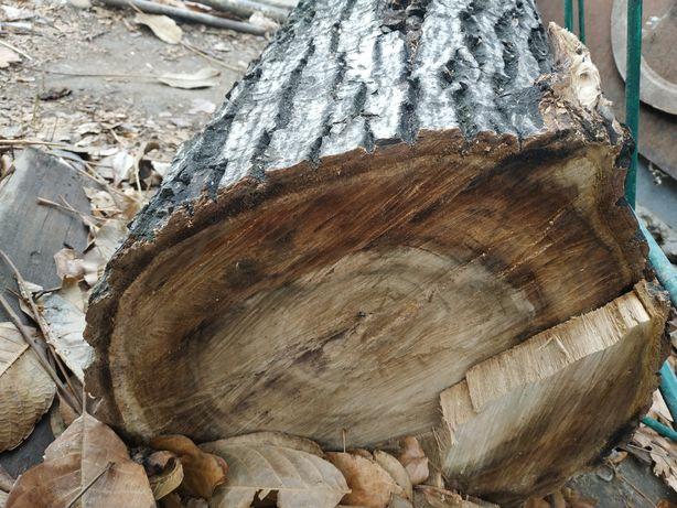 Ствол дерева орехового на сувениры или на дрова